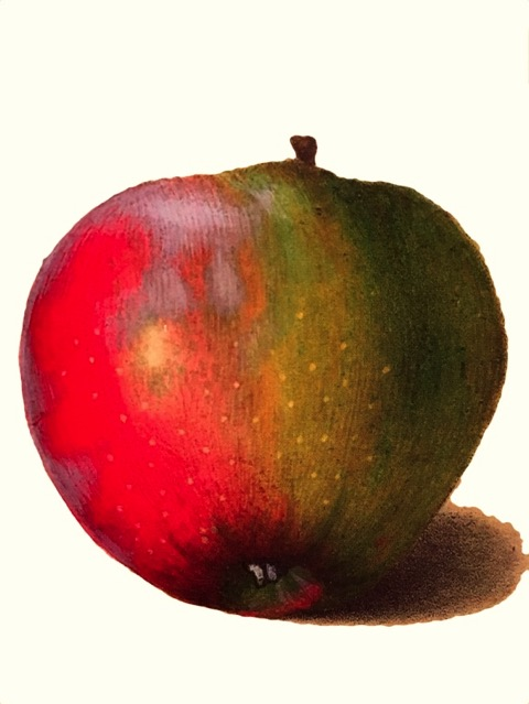 Illustration eines grünlich-roten Apfels, ©Verlag Hermann Schmidt