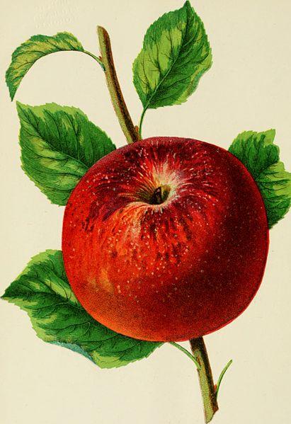 Illustrierte Abbildung eines roten Apfels mit Stiel und Blättern