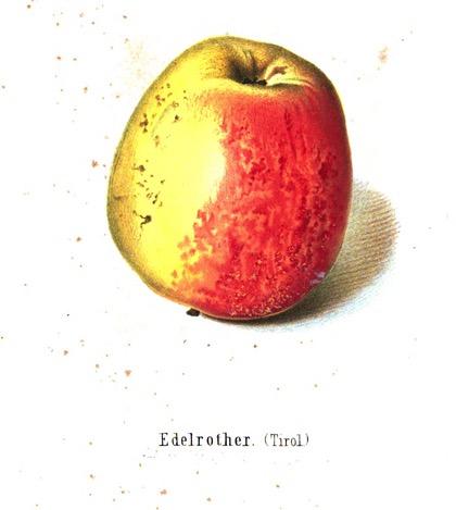 Kolorierte Abbildung eines gelb-roten Apfels, darunter der Text