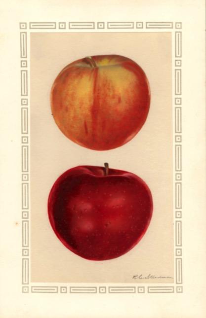 Aquarell eines rot-gelblichen und eines roten Apfels; ©USDA