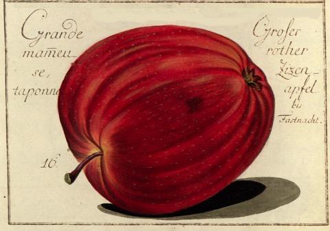 Historische Abbildung eines roten Apfels; BUND Lemgo