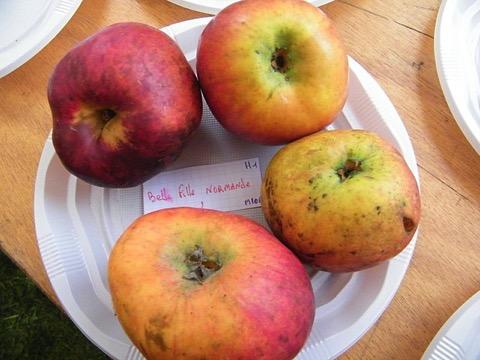 Foto von vier rot-gelben Äpfeln, die auf einem Teller liegen