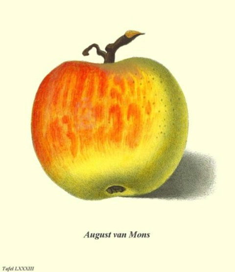 Historische Abbildung eines gelblich-rötlichen Apfels; BUND