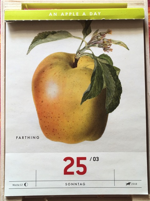 Ein Kalenderblatt mit der historischen Abbildung eines gelblich-rötlichen Apfels; USDA