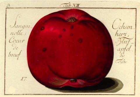 Historische Abbildung eines roten Apfels; BUND