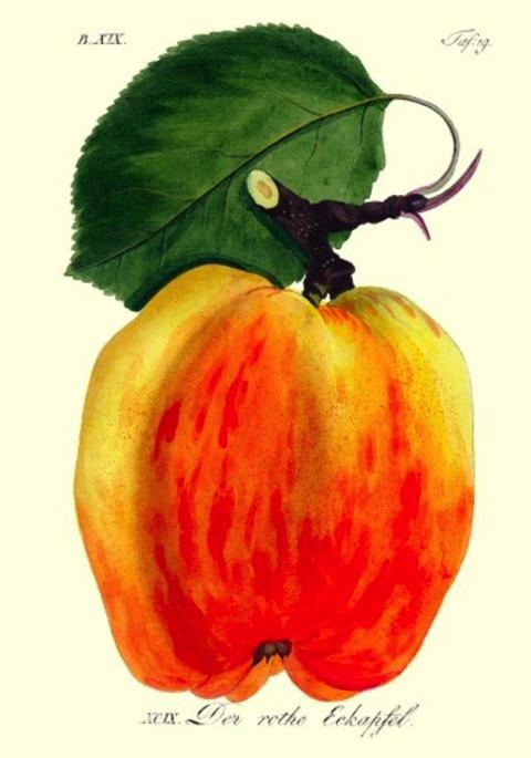 Historische Abbildung eines gelblich-roten Apfels mit Zweig und Blatt; BUND Lemgo