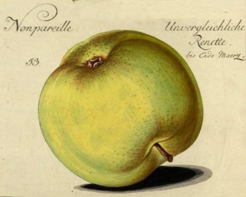 Historische Abbildung eines gelblich-grünen Apfels; BUND Lemgo
