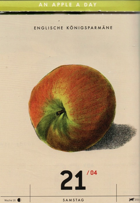Historische Abbildung eines rot-grünlichen Apfels; ©Verlag Hermann Schmidt