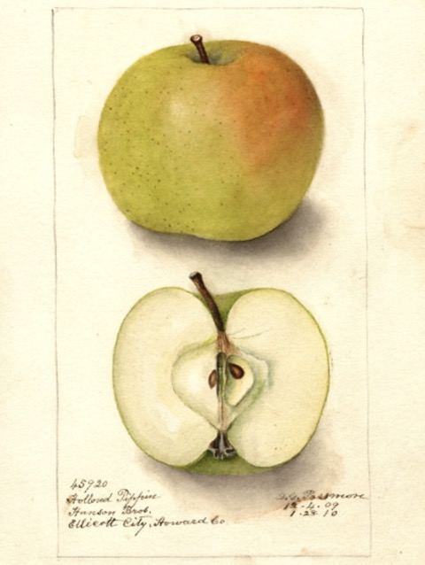 Historische Abbildung eines grünlich-rötlichen und eines aufgeschnittenen Apfels; USDA
