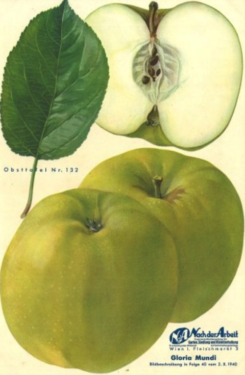 Historische Abbildung zweier grünlicher und eines aufgeschnittenen Apfels sowie ein Blatt; BUND Lemgo Obstsortendatenbank