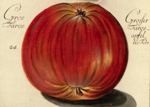 Historische Abbildung eines roten Apfels; BUND Lemgo Obstsortendatenbank