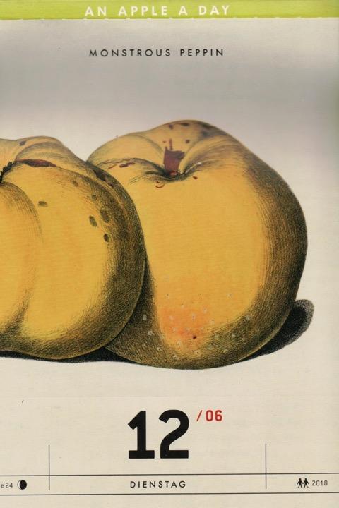 Historische Abbildung zweier gelblicher Äpfel; Verlag Hermann Schmidt