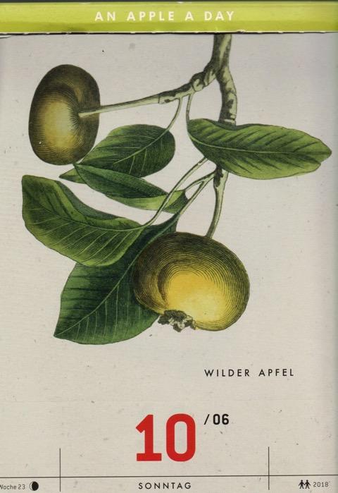 Historische Abbildung zweier grün-gelber Äpfel an einem Zweig mit Blättern; Verlag Hermann Schmidt