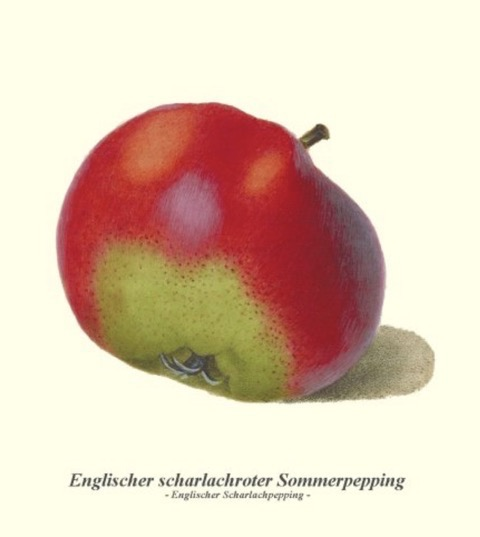 Historische Abbildung eines grünlich-rötlichen Apfels; BUND Lemgo Obstsortendatenbank
