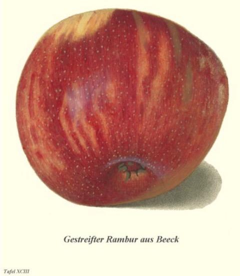 Historische Abbildung eines gelblich-roten Apfels;  BUND Lemgo Obstsortendatenbank