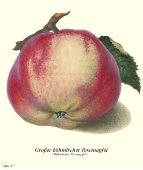 Historische Abbildung eines gelblich-rötlichen Apfels mit Ast und Blatt; BUND Lemgo Obstsortendatenbank
