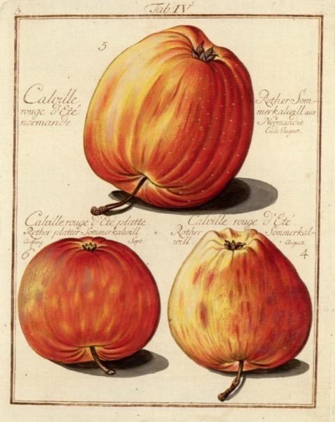 Historische Abbildung dreier rot-gelblicher Äpfel; BUND Lemgo Obstsortendatenbank