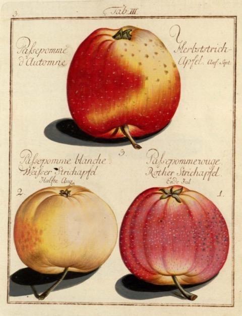 Historische Abbildung von drei gelblich-rötlichen Äpfeln; BUND Lemgo Obstsortendatenbank