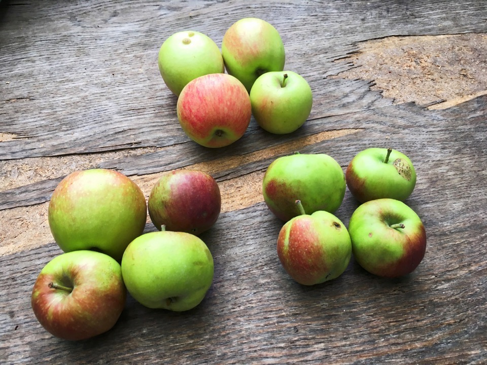 12 grünrote Äpfel liegen auf einem Holztisch