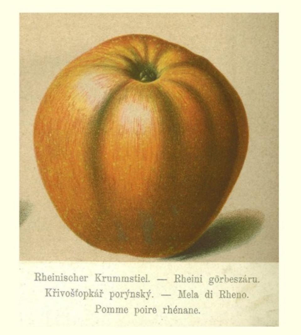 Historische Abbildung eines rötlichen Apfels; BUND Lemgo Obstsortendatenbank