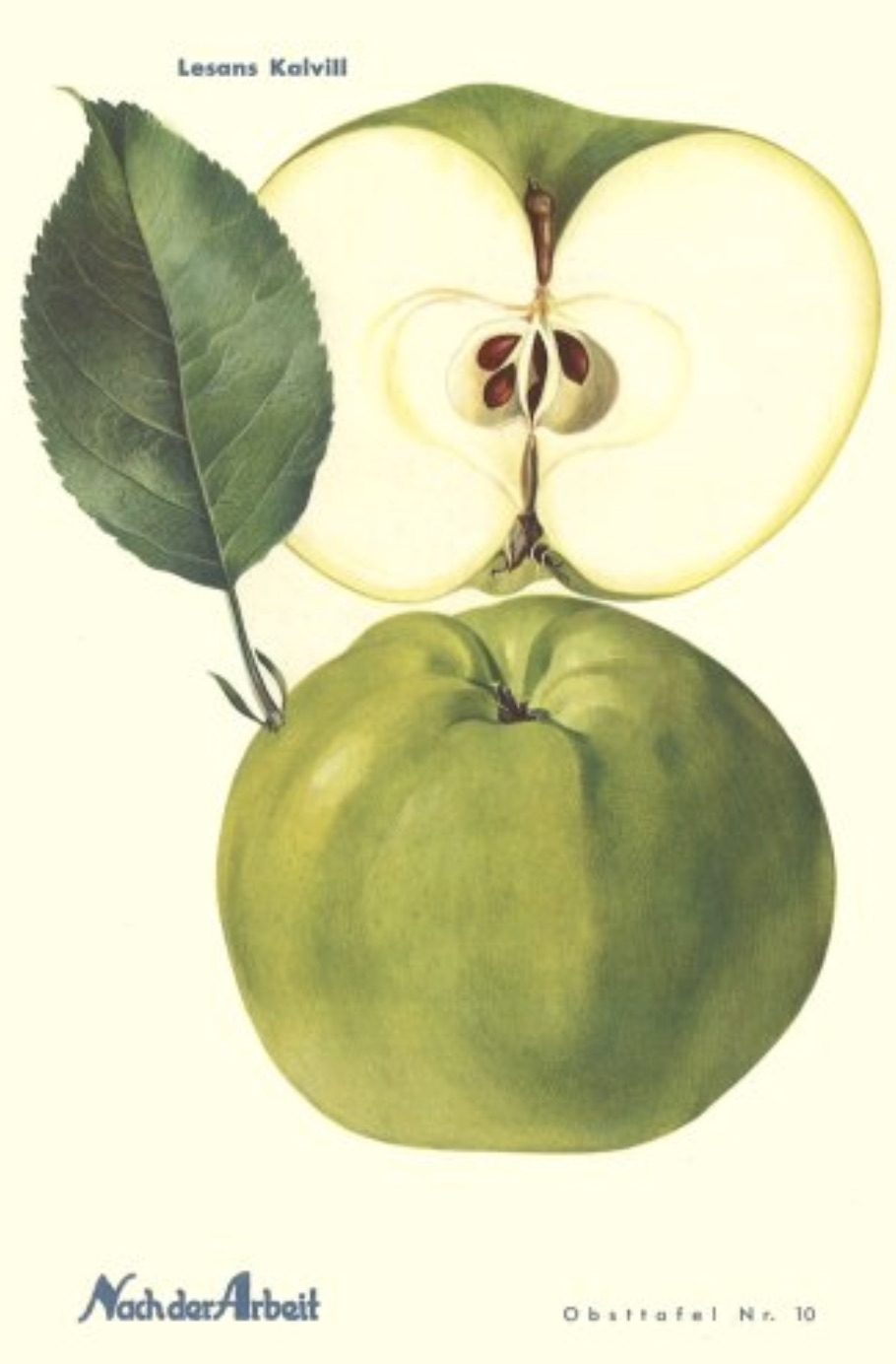 Historische Abbildung eines grünen und eines aufgeschnittenen Apfels; BUND Lemgo Obstsortendatenbank