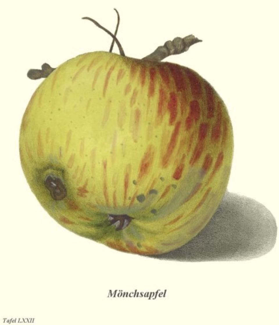Historische Abbildung eines grün-rötlichen und eines aufgeschnittenen Apfels;  BUND Lemgo Obstsortendatenbank