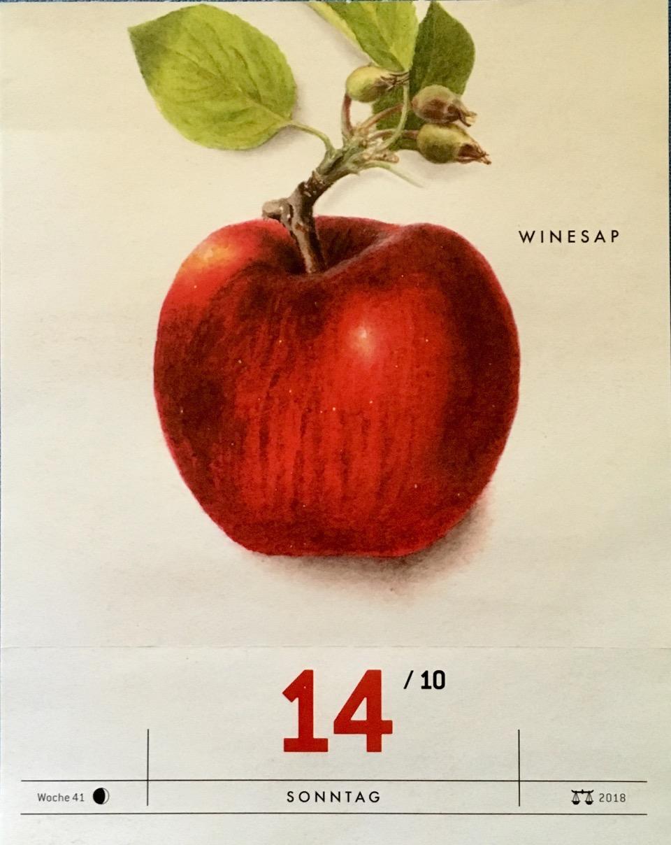 Kalender-Blatt mit einer Historische Abbildung eines roten Apfels und eines Zweigs; USDA, Verlag Hermann Schmidt