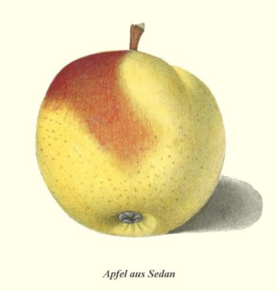 Historische Abbildung eines gelb-rötlichen Apfels;  BUND Lemgo Obstsortendatenbank