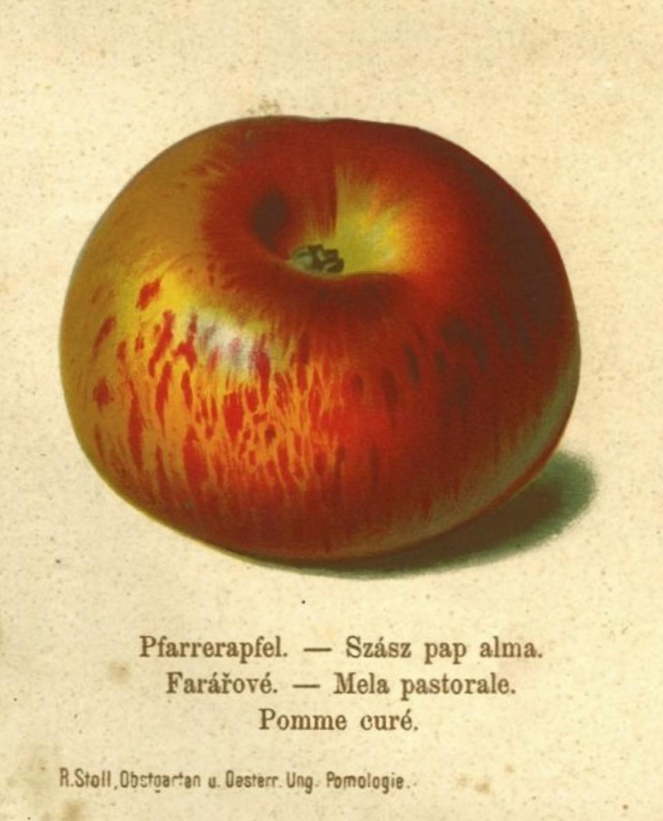 Historische Abbildung eines rot-gelblichen Apfels; BUND Lemgo Obstsortendatenbank