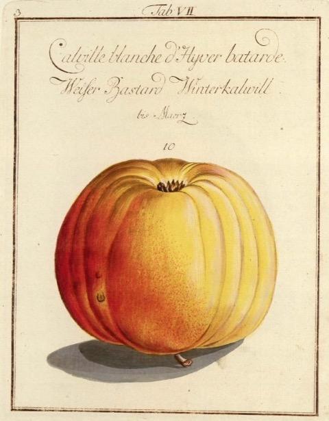 Historische Abbildung eines gelb-roten Apfels;  BUND Lemgo Obstsortendatenbank